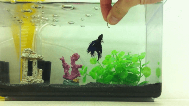 Top 25 Betta Fish Food in 2019: A Complete Buying Guide (Review)
