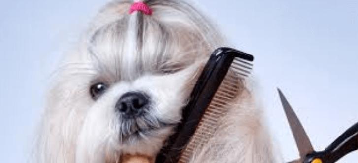 20 Best Dog Combs 2019 | Eliminate Shedding, Matting, Fleas, Lice, Ticks