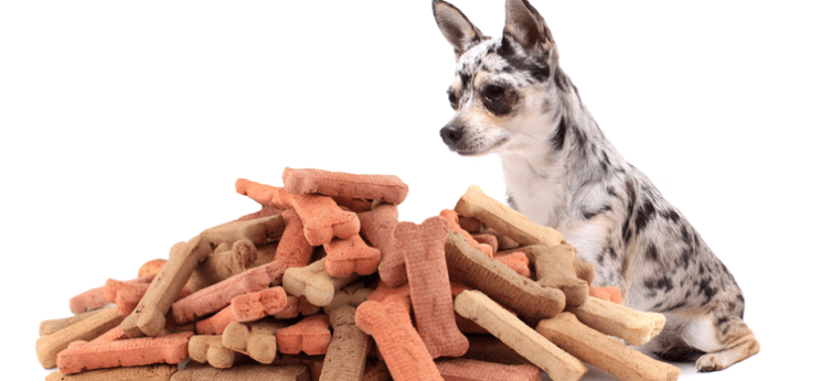 20 Dog Treat Pouch Bags 2019 (Reviews, FAQs Included)