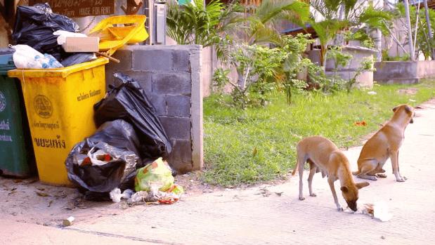 Dog Treat Pouch