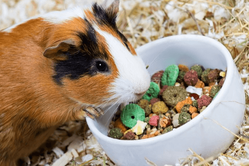 2019 Top Picks for Guinea Pig Food: What Do Guinea Pigs Eat?