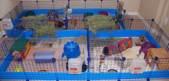 25+ Best Guinea Pig Cages 2019 (Guide with Reviews)