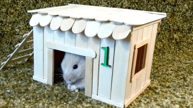Get to Know Your Hamster and Their Housing Interest (FAQs)