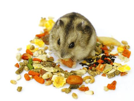 Hamster food problems