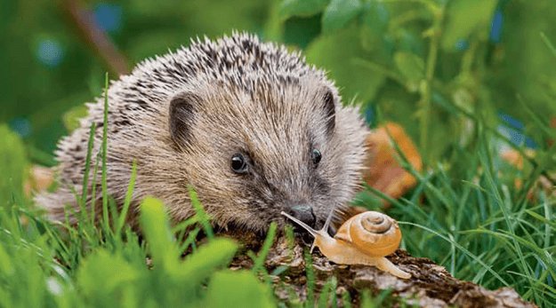 Best Toys for Hedgehogs