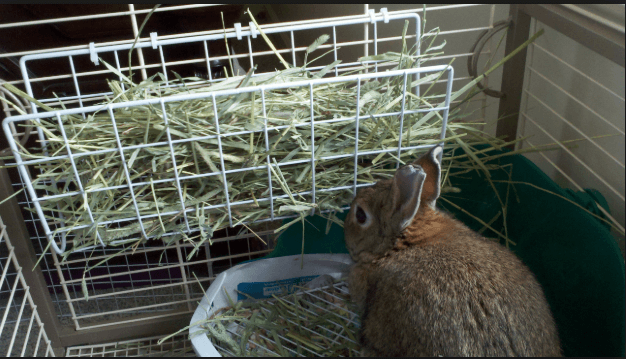 best rabbit hay feeder