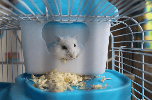 hamster in his cage