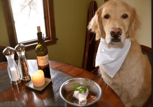 large dog food