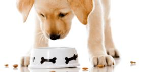 organic dog food vet faqs
