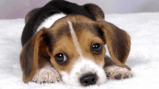 puppies grow weight