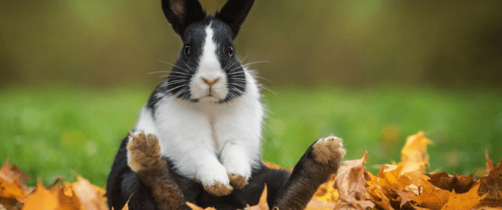 Things You Need to Know Before Adopting a Rabbit