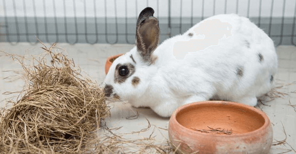rabbit care faqs