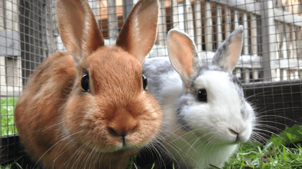 Common Questions About Taking Care of Rabbits [FAQs]