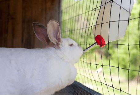 water bottle for rabbits