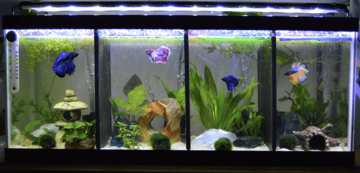 Betta Fish Tank FAQs