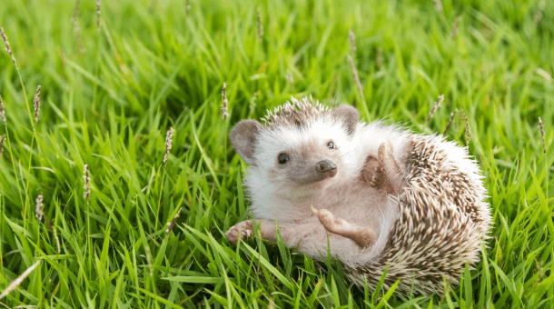 Hedgehog cage FAQs