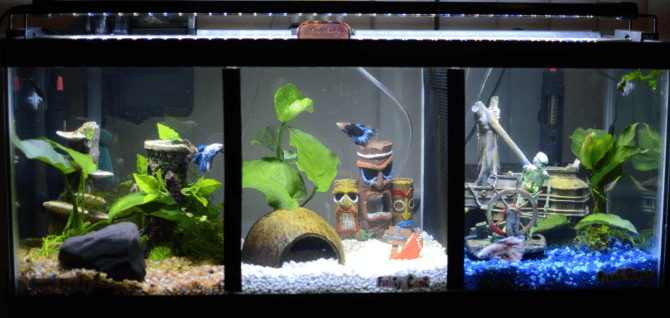 Useful Insights into the Aquarium's Environment of your ...
