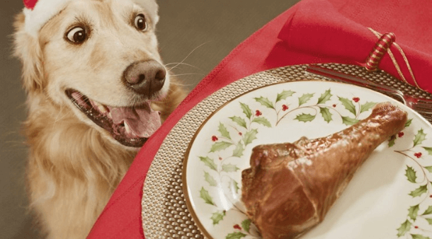 dog eating frozen chicken