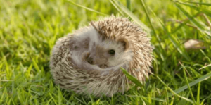 Best Hedgehog Houses