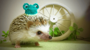 Best Hedgehog Wheels