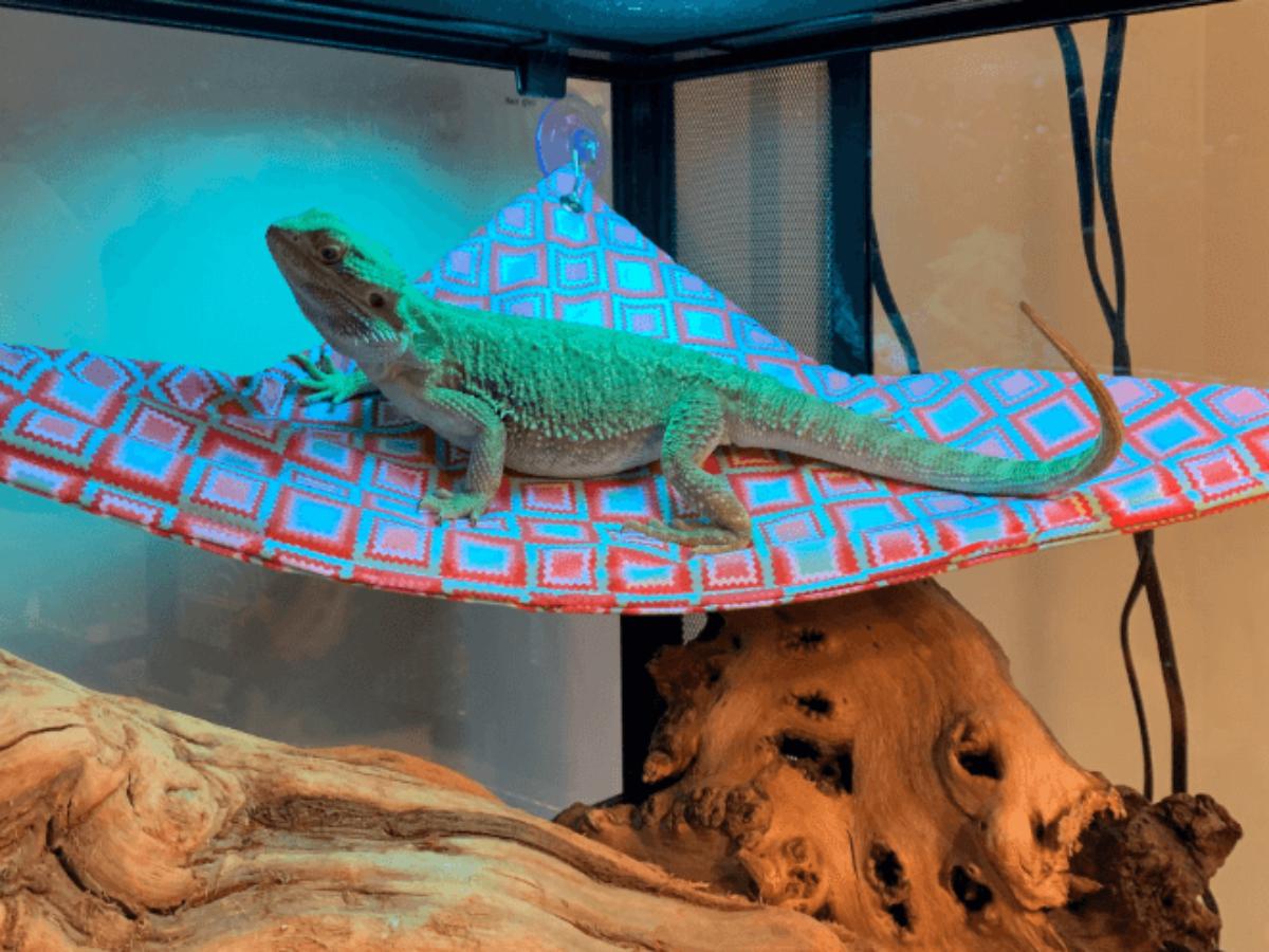 Niteangel Bearded Dragon Hammock Reptile Lounger Triangle 17 x 12.5