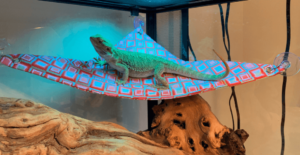 Bearded Dragon Hammock