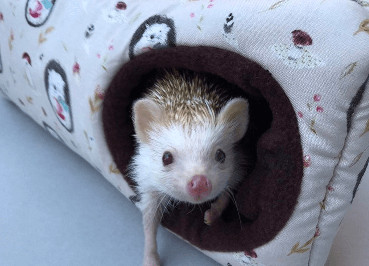 Hedgehog Carrier Reviews