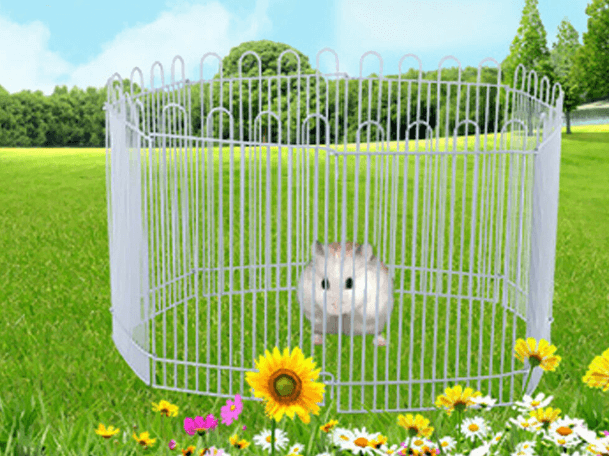 Hedgehog Playpen