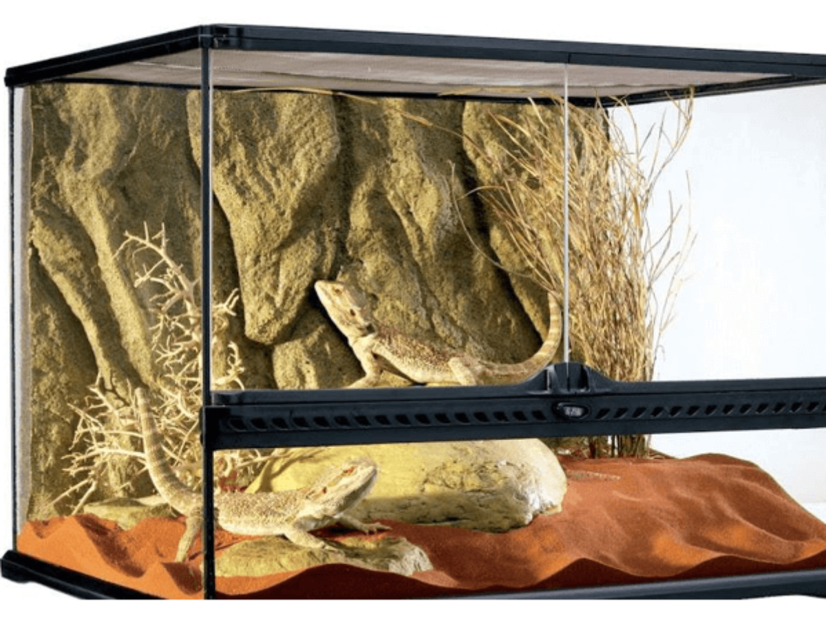 Best Plants For Bearded Dragon Tank In 2020 Latest