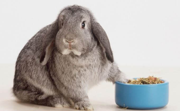 Choosing rabbit food bowls
