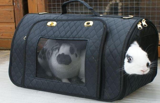 How to buy a rabbit carrier