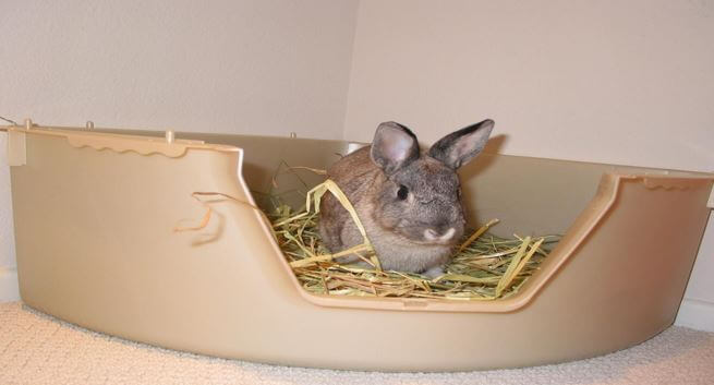 How to choose the right litter box for rabbits