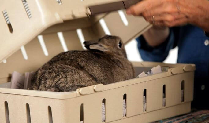Rabbit Carrier