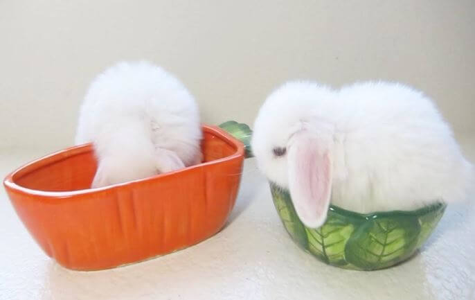 Rabbit food bowl