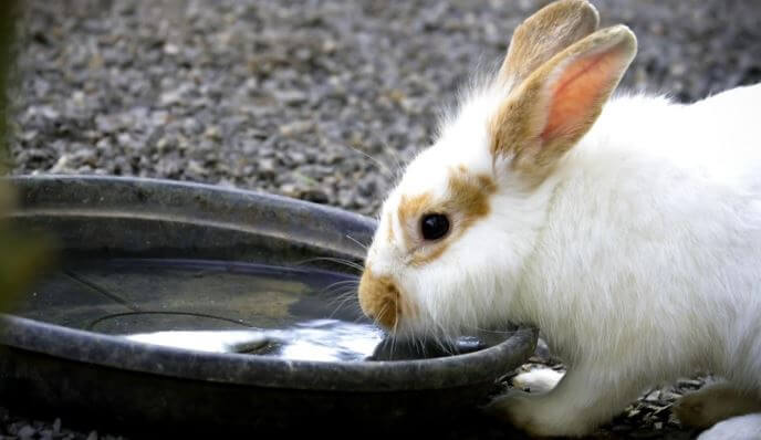 Rabbit water bowls