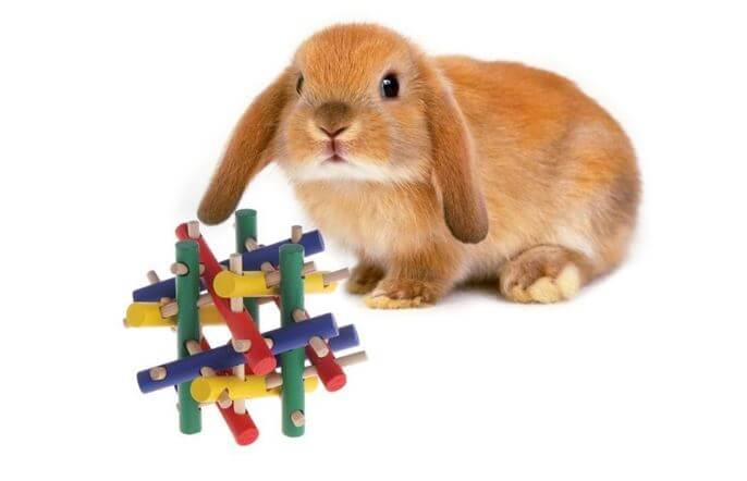 Rabbits need toys
