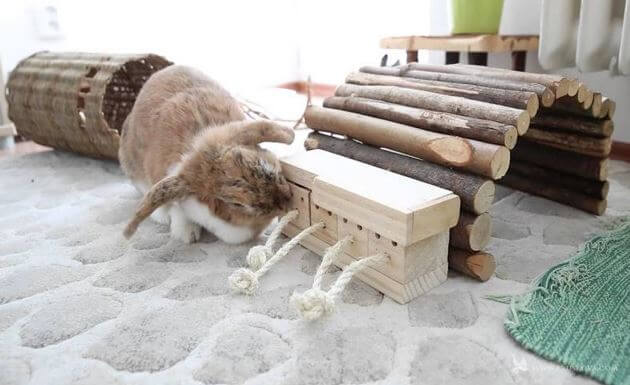 Toys for rabbits