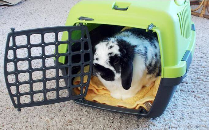 What to know more about bunny carrier