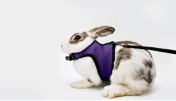 BOBO rabbit harness with leash