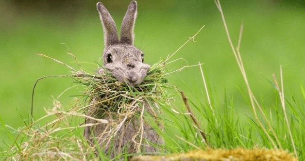 Bunnies love hay