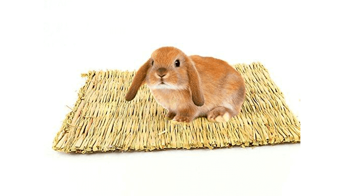 Common problems with rabbit mat