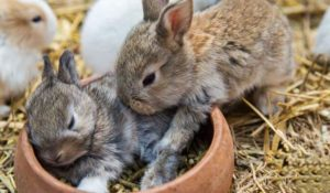 Rabbits and pellets Picking the best food source