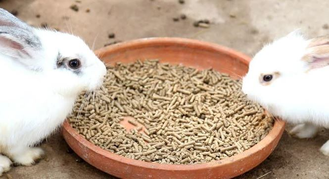 The best rabbit pellet