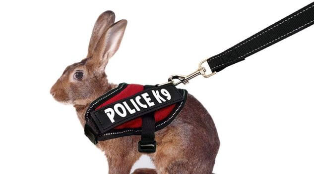 Vehomy rabbit harness leash