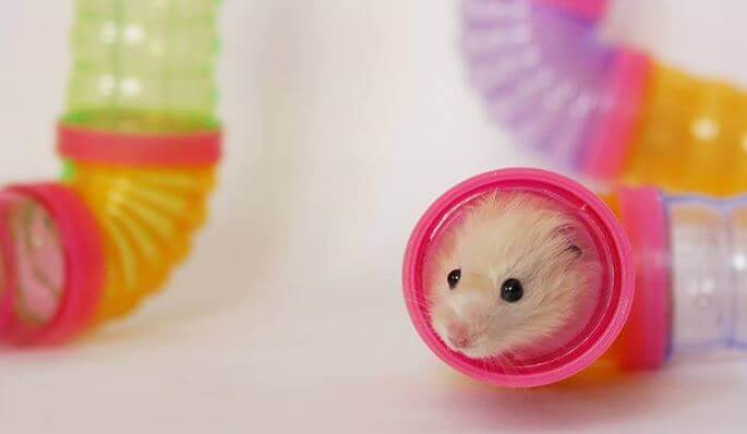 Hamsters need accessories
