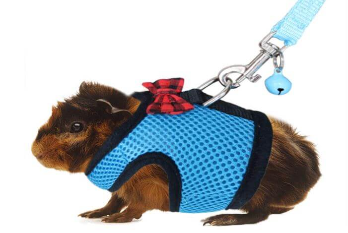 Best Guinea Pig Harness and Leash