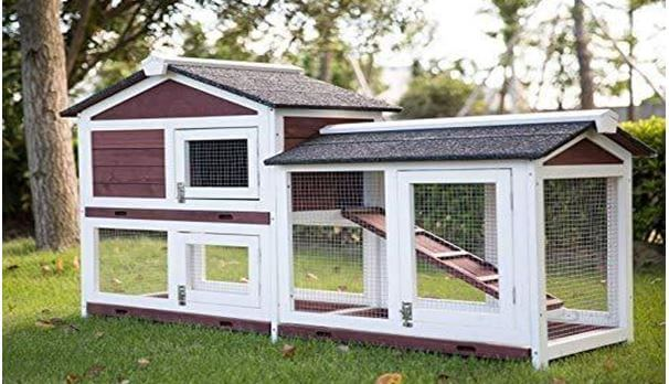 Bunny cages outdoor