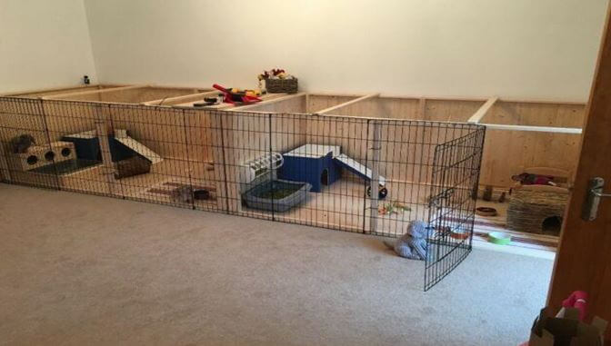 perfect playpen for rabbits