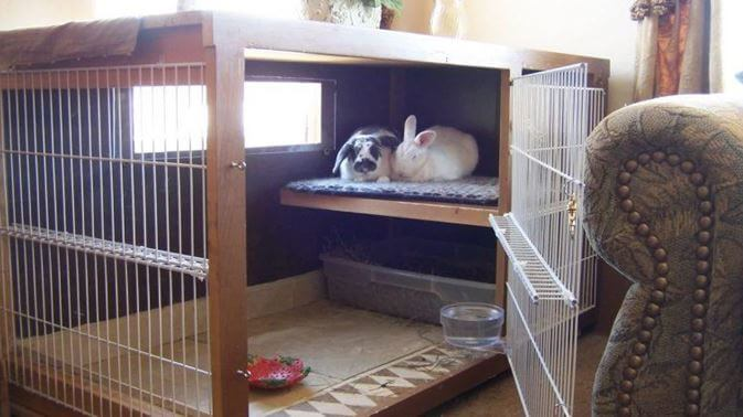 rabbit fence and playpen