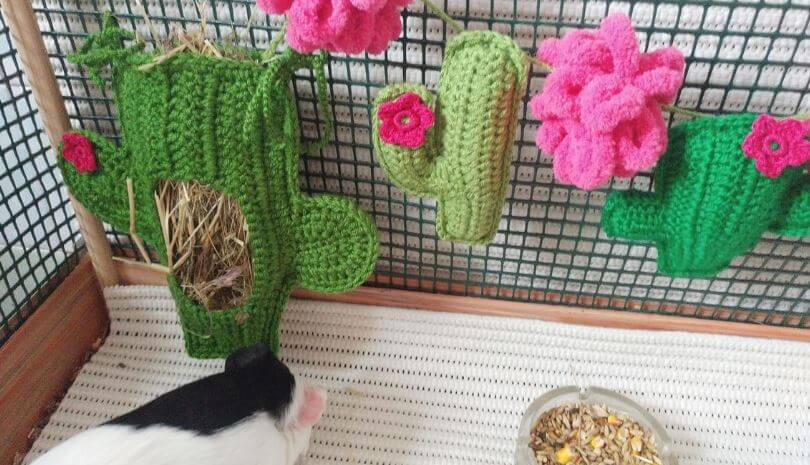 Best Guinea Pig House Reviews
